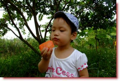 Kulkul at papaw garden - eating papaw
